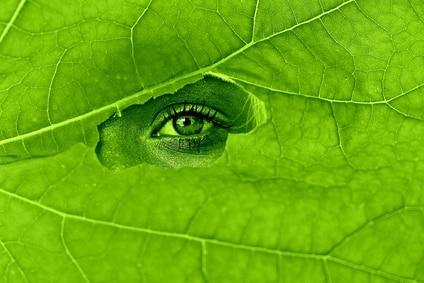 La chlorophylle nergie vitale renforce la sant nutriphys for Espace chlorophylle